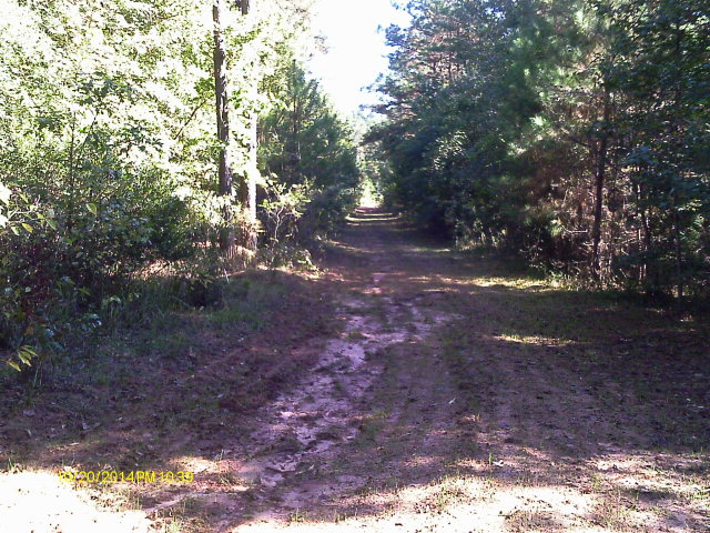 Road Food Plot